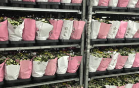Duh.de | Plastikmüllproblem des Pflanzenhandels
