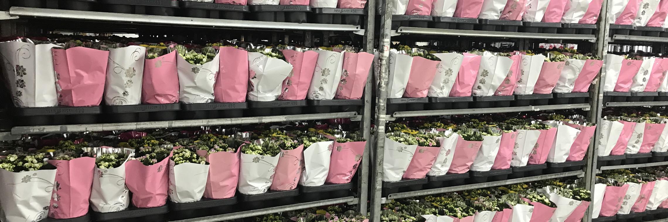 Pflanzenhandel verschwendet 39 Millionen Einweg-Plastikpaletten