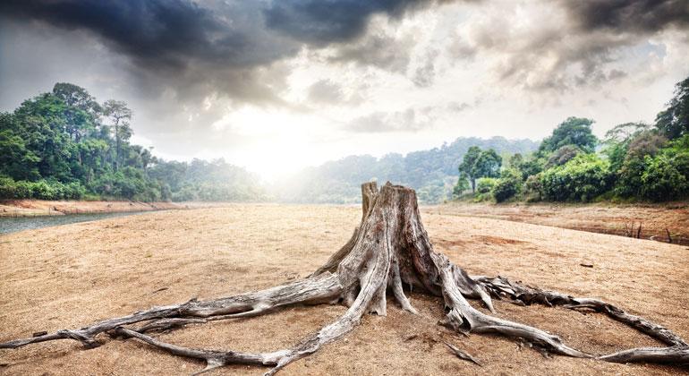 Alarmierende Zerstörung der biologischen Vielfalt