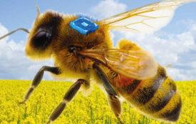 UFZ.de | Micro-SensysGmbH | Bienensterben