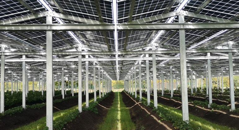 Agri-PV: Innovatives Gewächshaus sorgt für feuchte Böden