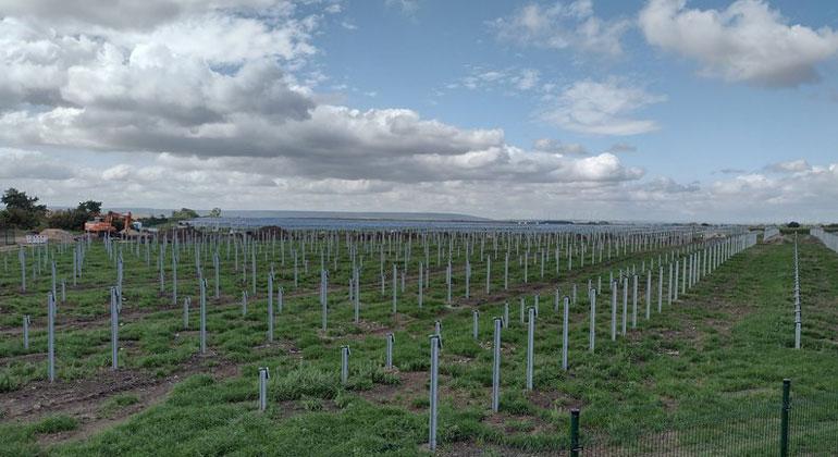 NATURSTROM | Solarpark Henschleben
