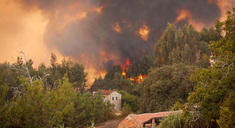 Wenn die Wälder brennen