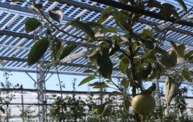 Fraunhofer ISE | Obstanbau_Solar