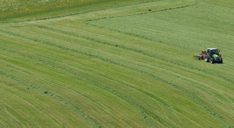 Grasland in Gefahr