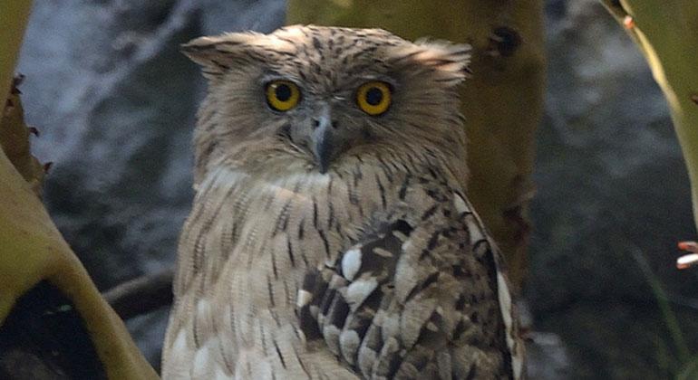 Eine von fünf Vogelarten in Europa ist bedroht